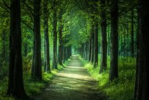 SCENE ● FOREST ROAD