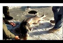 Рыбалка на зимние жерлицы. Не улов а огромная удача.