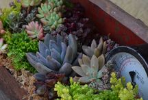 Succulents. :-) / by Maxine Hronek
