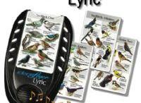 Birding with Children / Tools for enhancing bird studies.