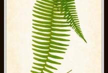 Botanico - Botanical -Botanique