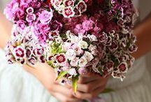 flower: sweet william