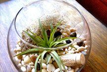 Indoor plants / by Lauren Driskill