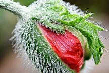 besondere Blumen / Pflanzen