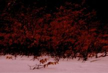 Hellebæk ~ Woodland Mills Photography / Art photography