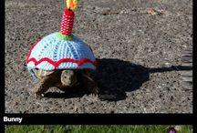 ??želví kostýmy??