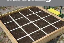 ogrodnictwo kwadratowe