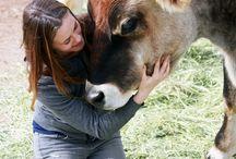 Rescued Farm Animals!