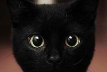 CATegory: Black cat White / Black Cats, White Cats, Tuxedo Cats