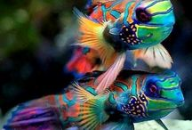 beautiful fishes