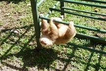 oh sloths