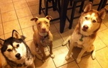 One Lucky Pooch!! / These are some of the dogs I take care of through my business One Lucky Pooch!   / by Mallorie Karg