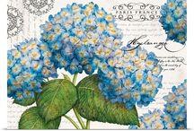 hortensje, bławaty, niezapominajki i inne błękity