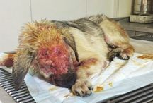 Animal Abuse and Neglect
