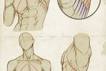 anatomy reference