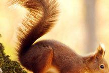 eekhoorntjes, squirrels en chikmunk