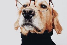 my all time favourite hipster dog