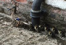 Wildlife at Burton Constable
