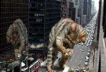 Gatos-imagens(engraçadas)