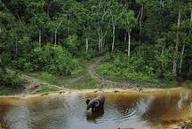 Central African Republic / Central African Republic