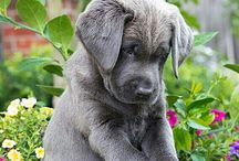 Animals aka cute dogs