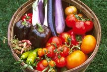 Vegetable and Herb Gardens / Gardens we love!