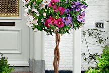 Çiçek/Eve