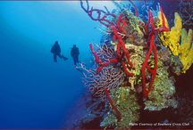 Cayman Islands / by Jetset Extra
