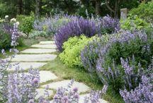 Gardens / Special ideas