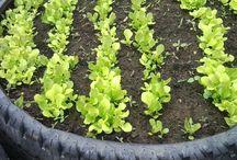 Garden Ideas / by Lisa Baker