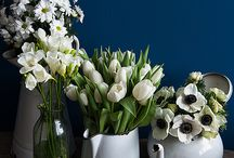 Orchids, tulips, bulbs