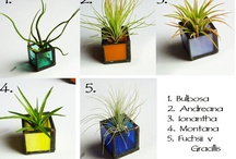 Airplants / by Geraldine Handa