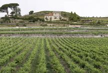 EXPERIENCIA REVOLTOSA EN FAMILIA: por los caminos del VINO y la COMIDA / CASA RURAL VIXIDE (LALÍN) Y BODEGA MARQUÉS DE VIZHOJA (ARBO) Vive en familia cómo se cosecha el vino, cómo se cuidan los viñedos,...todo pensado para pequeños y adultos. Da rienda suelta a tu imaginación y crea con los tuyos  fantásticos platos con productos de la tierra, embotella y entra en contacto con la tierra... Alójate en esta fantástica casa rural y disfruta de las actividades que tenemos preparadas para ti y para tu familia.  ¿ a qué estás esperando?