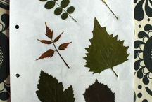 Herbarium / The plants i've collected, because of their beauty and phenomena.