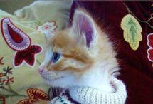 Cute kitten!!