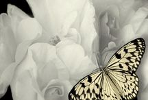 Butterflies / by 'Lise Lacroix