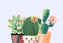 fond écran cactus
