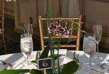 Фаленопсис на стол