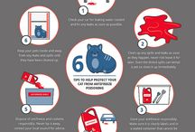 Inforgraphics and Pet Care Advice / Share the knowledge about animal welfare and care