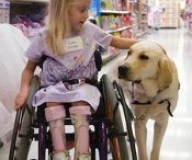 Canine Companions / by Sue Frazier