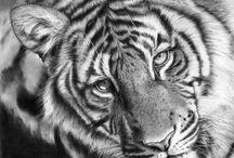 Tigers / My favorite animal...