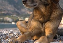 Street dogs / Они тоже красивые