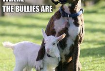 Animal memes / All cute funny protective memes are here (animals)