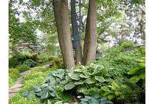 Gardening / by Lindsey Ricciardi
