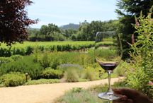 Visit Napa Valley / We have traveled to Napa so often that I have many tips and photos to share!
