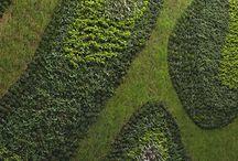 Vertical Gardens....