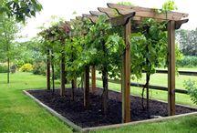 Grape vine patio