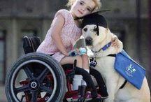 Yardımcı Köpekler