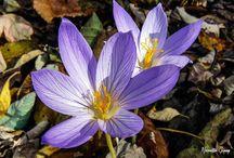 Bitki Fotoğrafları | TRT Avaz
