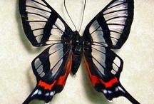 Nature/Butterflies